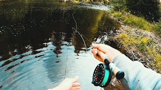 Fiske efter HARR och ÖRING i liten å
