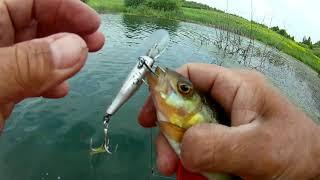 Рыбалка на Окуня спиннингом Снимаем сети браконьеров в которых полно погибшей рыбы
