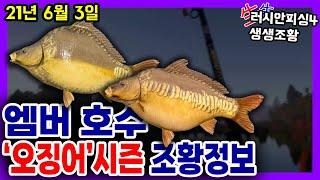 러시안피싱4│210603 엠버호수 오징어시즌 조황정보