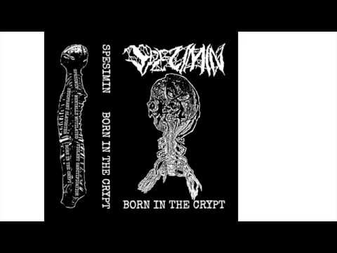 SPESIMIN - BORN IN THE CRYPT (2020)(METAL)