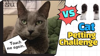 Petting Cat Challenge / Cat vs Human Hands / hate or love by Korat