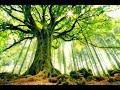 Méditation guidée avec Margarita Nagel (4)