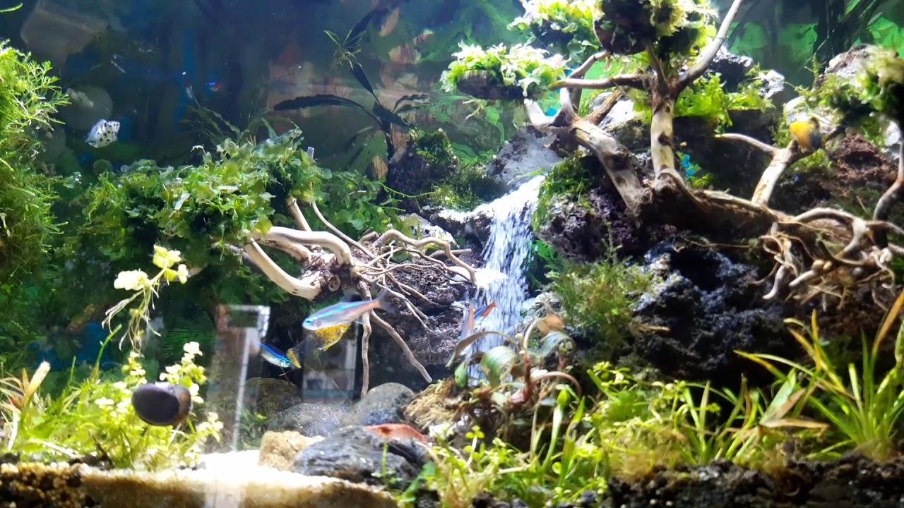 Air terjun aquascape(1) - YouTube