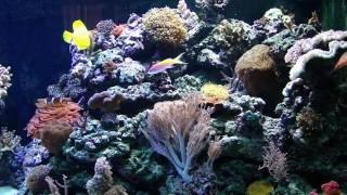 338 Gallon In-wall Aquarium Jan Korbijn