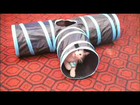 Collapsible Cat Tunnel Tubes Toys  MYIDEA® PET