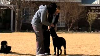 Bob Martin: Guide Dog Association Of South Africa – Puppy Training  (5 August 2014)