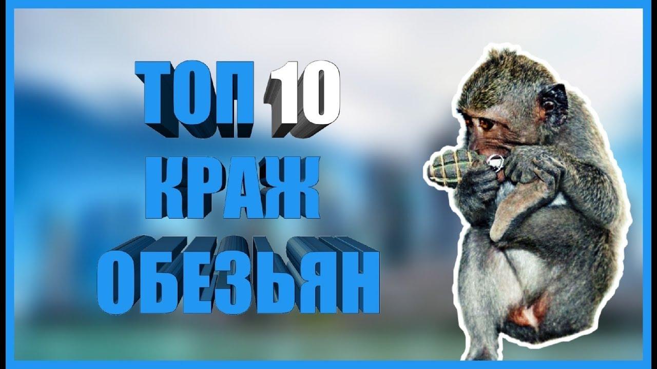 Топ 10 Краж Обезьян. Смотреть Видео Приколы с Животными. Подборка Ржачных Видео Приколов 2019 | Боты для Автоматического Заработка