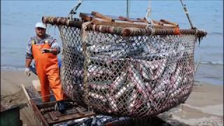 Работа в Норвегии на рыбных заводах 2019!!Work in Norway at fish factories2019!!
