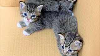 Tiny Kittens Were Rescued From The Rooftop by A Firefighter Are So Adorable And Super Cute