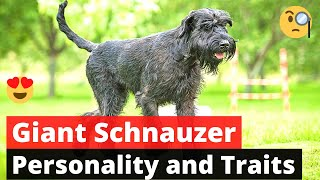 Giant Schnauzer: What everybody needs to know about this dog breed?