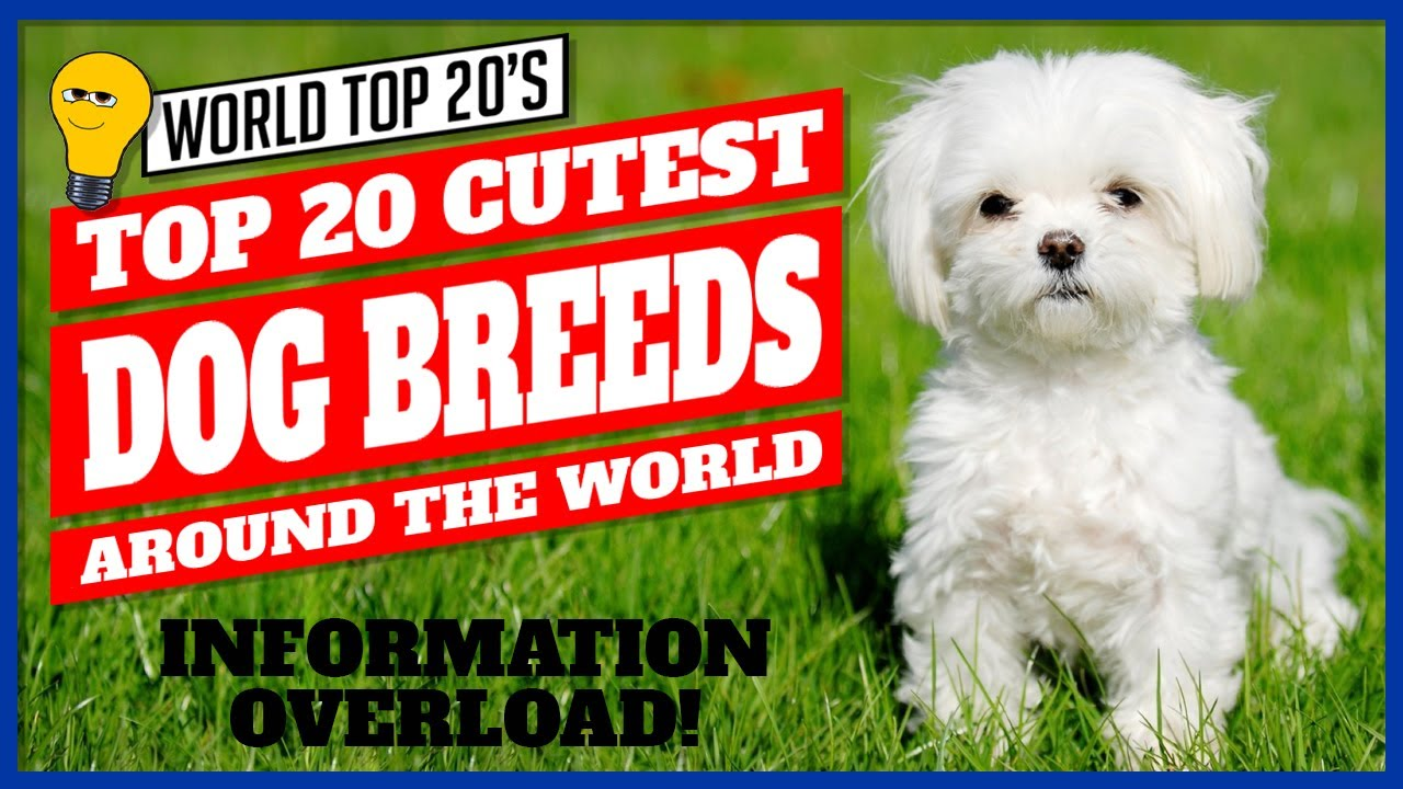 Top 20 Cutest Dog Breed Around The World