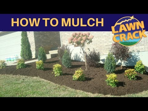 mulch-like-a-pro-|-how-to-mulch-tutorial-|-how-to-mulch-and-edge-|-landscaping-tips-|-lawncrack