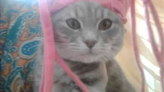 Моя кошка (смешные фото)