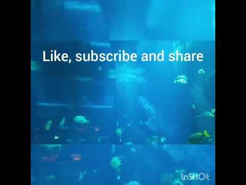 """The Lost Chambers""- aquarium at Atlantis ""The Palm"" (Dubai)"