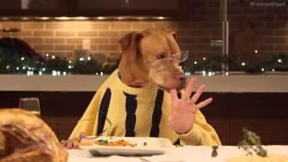 13 собак и один кот за рождественским столом
