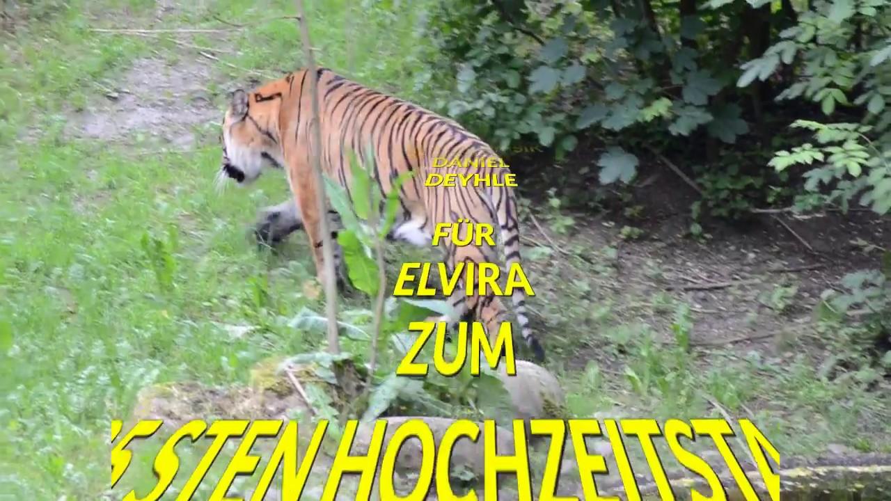 tiger spiele
