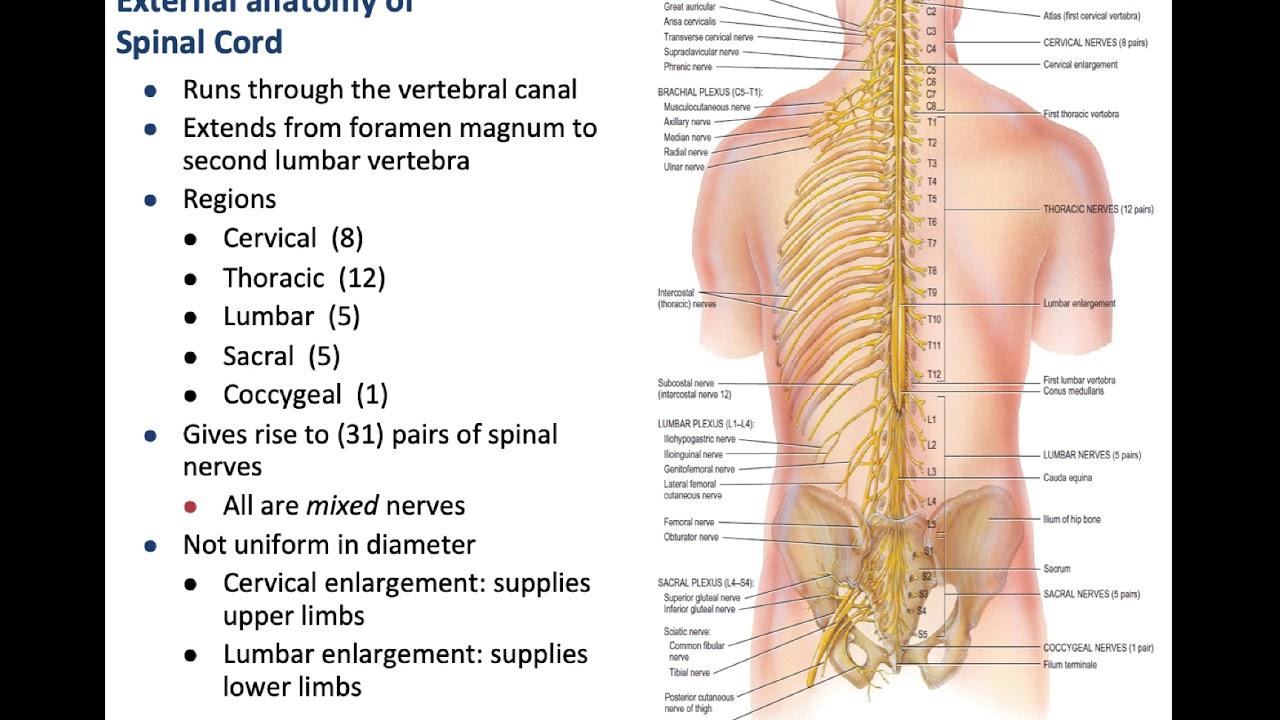 Course: NEUROSCIENCES AND SPECIAL SENSES