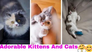 Tik tok Pets: Adorable  and Cutest Cats Kittens Compilation
