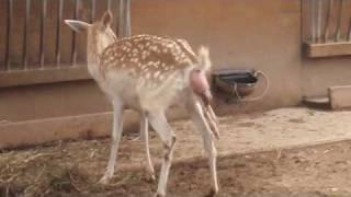 vuclip Deer Birth Experience
