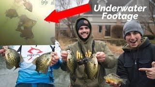 MASSIVE SCHOOL OF FISH (Underwater catching footage)