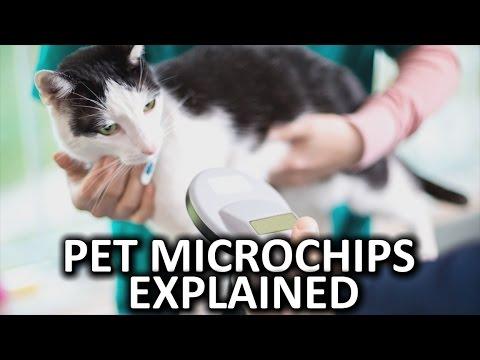 How Do Pet Microchips Work?