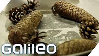 So lecker ist Essen aus dem Wald | Galileo | ProSieben