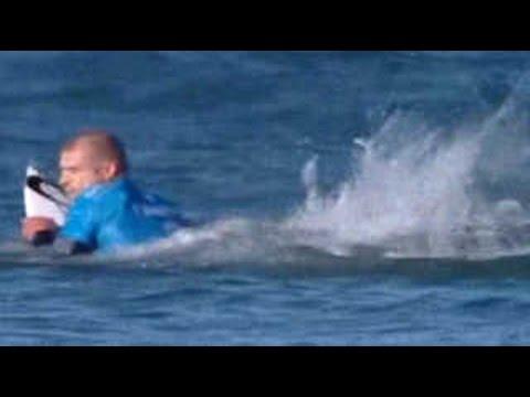[지구촌화제] 등 뒤에서 나타난 상어…그 결과는?