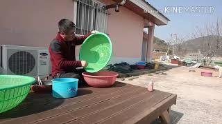 민물새우(새뱅이),미꾸라지(미꾸리) 잡아서 민물새우젖갈…