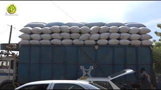 Commercialisation de l'arachide à Touba: Le Prix du marché noir domine avec 300 frs le prix du Kg