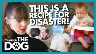 Victoria Tells Parents to 'Step Up' and Protect Their Children | It's Me or The Dog