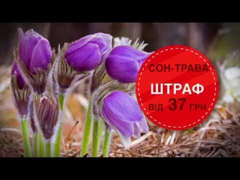 Защищено Красной книгой! Как спасти исчезающие растения