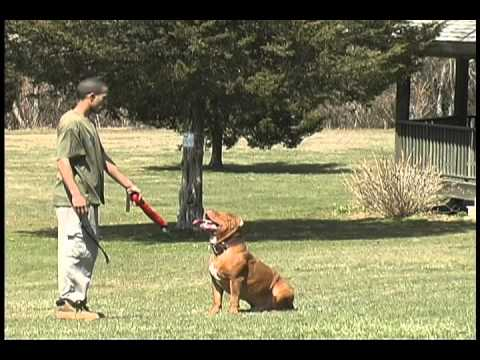 Worlds best trained dog 'AMAZING' AWESOME DOGS!