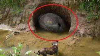 कुछ लोग इसे पत्थर समझते थे , मगर ये तो ...