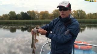 Рыболов Эксперт. Твичинг