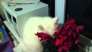 Кошка нюхает цветы