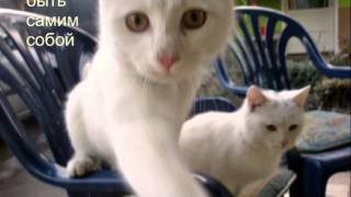 Белые Котята шлют привет