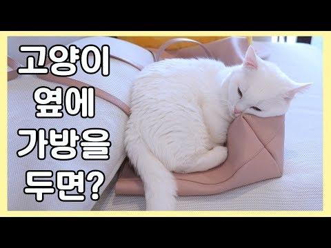 고양이 옆에 가방을 두면 안 되는 이유