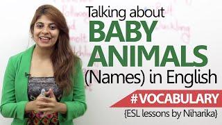 Learn English - Baby Animals names ( Beginner English Lesson) thumbnail