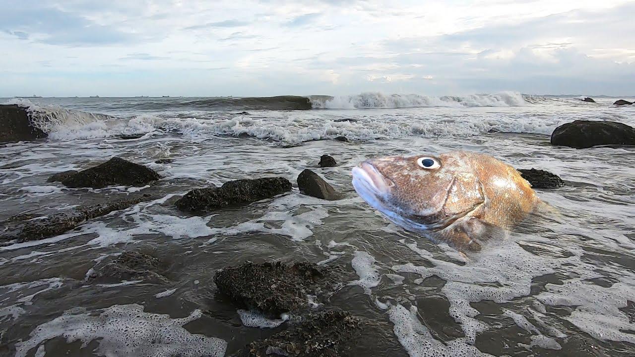 台风刮起少见大浪,直接拍死几斤重的大鱼,小妹冲过去捡了就跑
