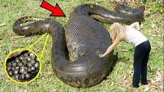बच्चे इसे ना देखे, जब जानवरों के पेट से निकली अजीब चीज़ें | amazing animals found on the earth