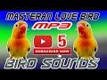 Masteran Lovebird Pagi Dan Sore  Mp3 - Mp4 Download