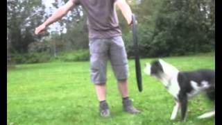 Trickdogging Contest - Übung 2
