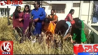 Roof Farming : Hyderabadi Cultivates Wheat On Terrace At Neredmet. ...