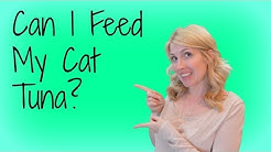 hqdefault - Canned Foods For Diabetic Cats
