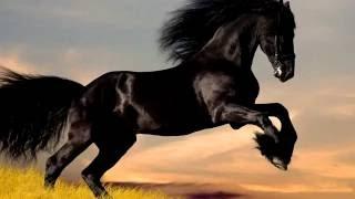 Породы лошадей. Фризская лошадь.Характеристика