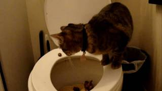 Toilet Training Zoe - Day 8 (HD)
