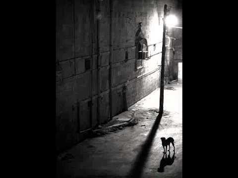The black dog runs at night dwh 6