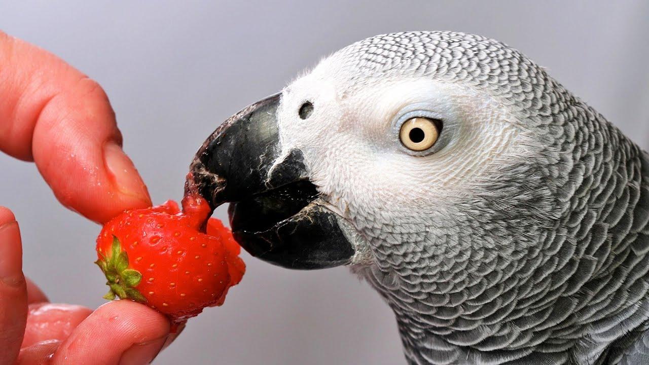 Which Birds Talk The Best Pet Bird Youtube