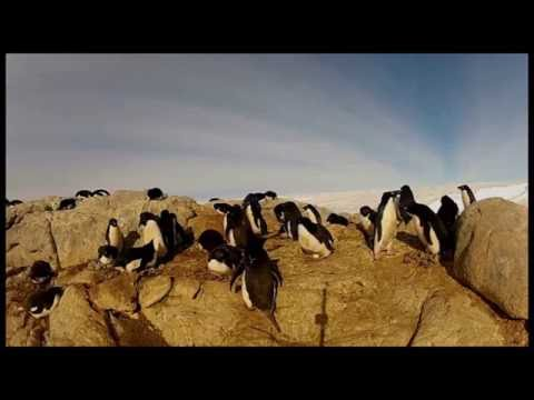 Antarctica - Wittrock, Carl