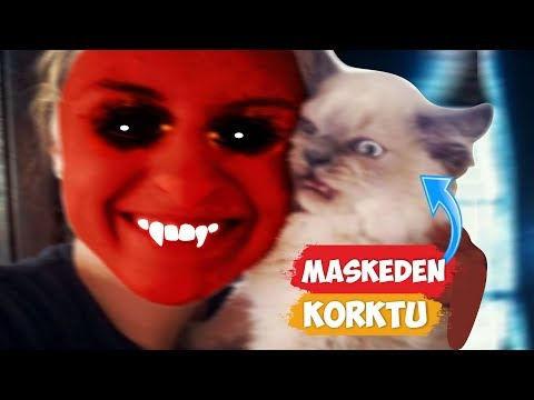 Cats Scared Of Masks | [2018 Compilation]  Funny Moments